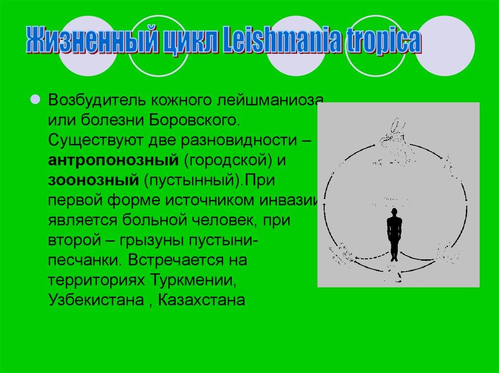простейшие паразиты организме человека