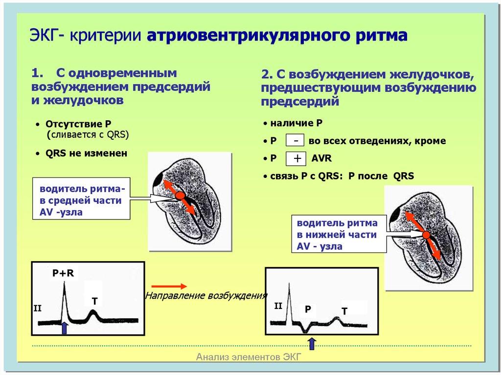 Fetal liver