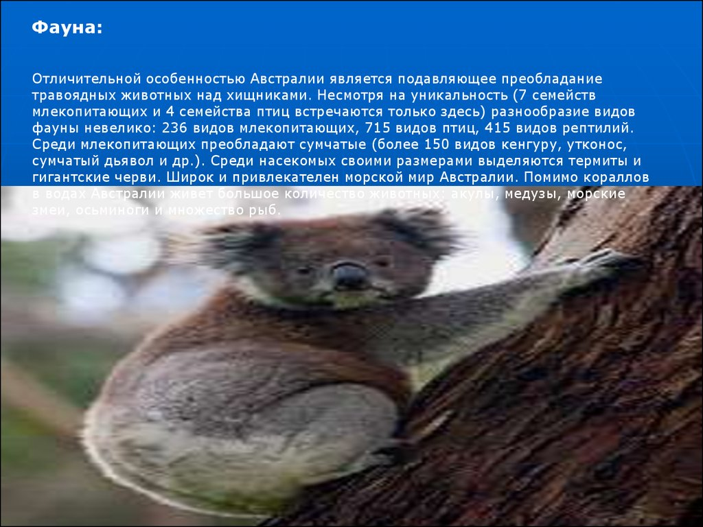 презентация на тему животные гор