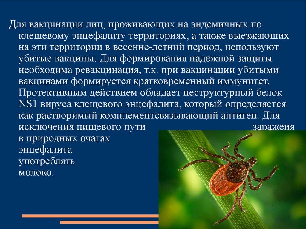 Энцефалит Русский Весенне-Летний