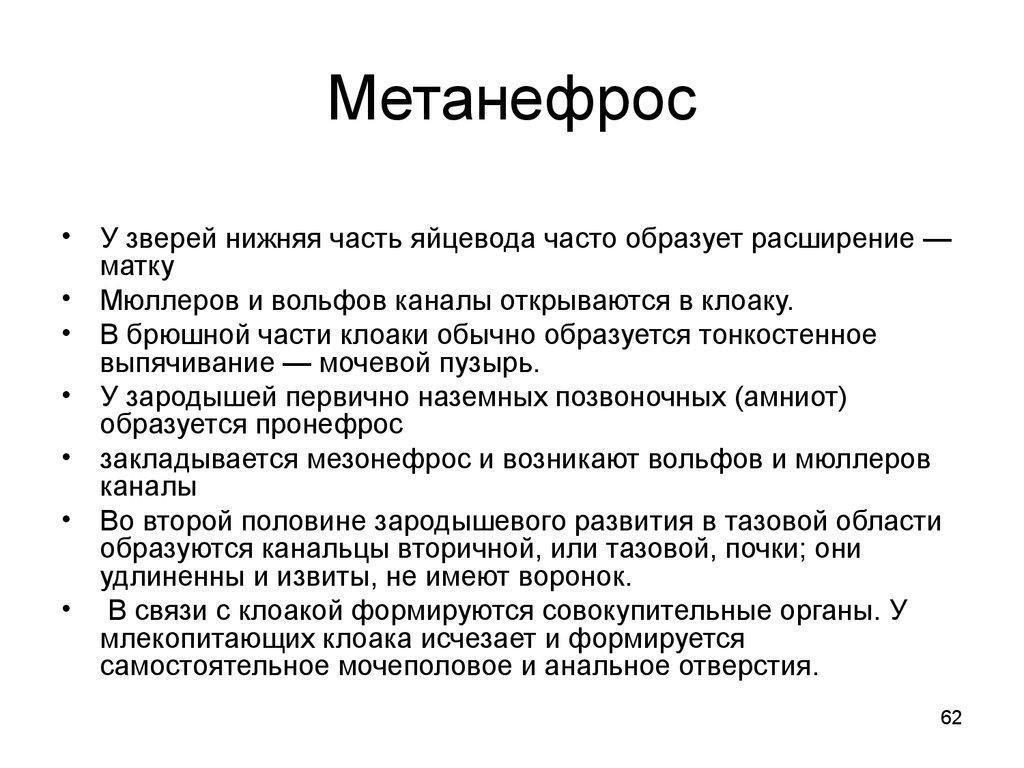Метанефрос