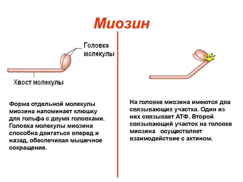 Связанный белок это