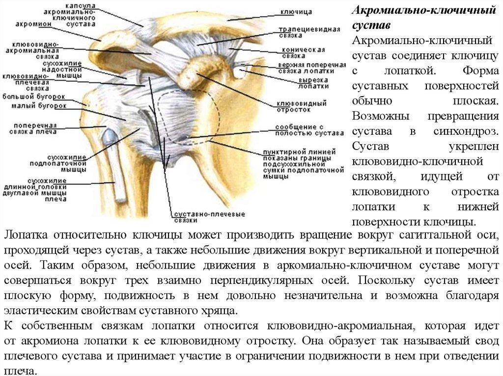 акргмиальный разрыв плечевого сустава
