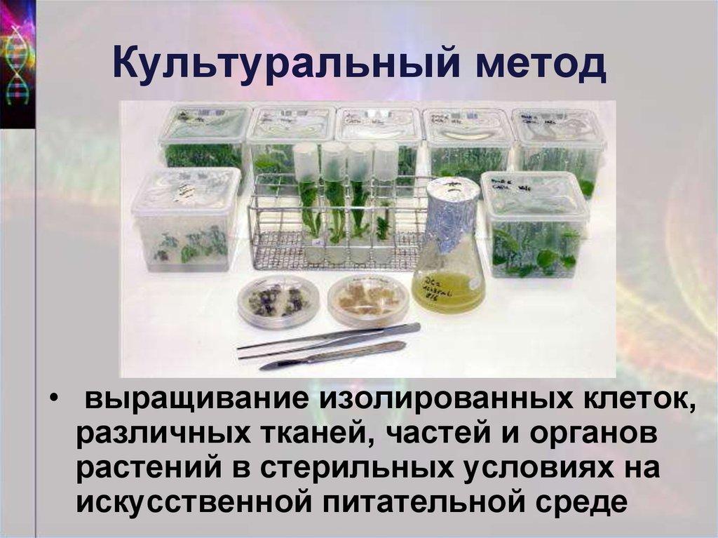 Выращивание тканей вне организма метод 96