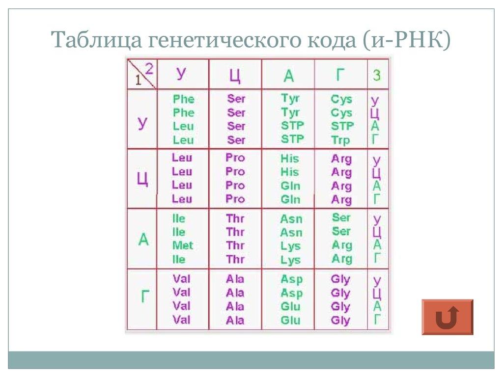 презентация по биологии молекулярная генетика