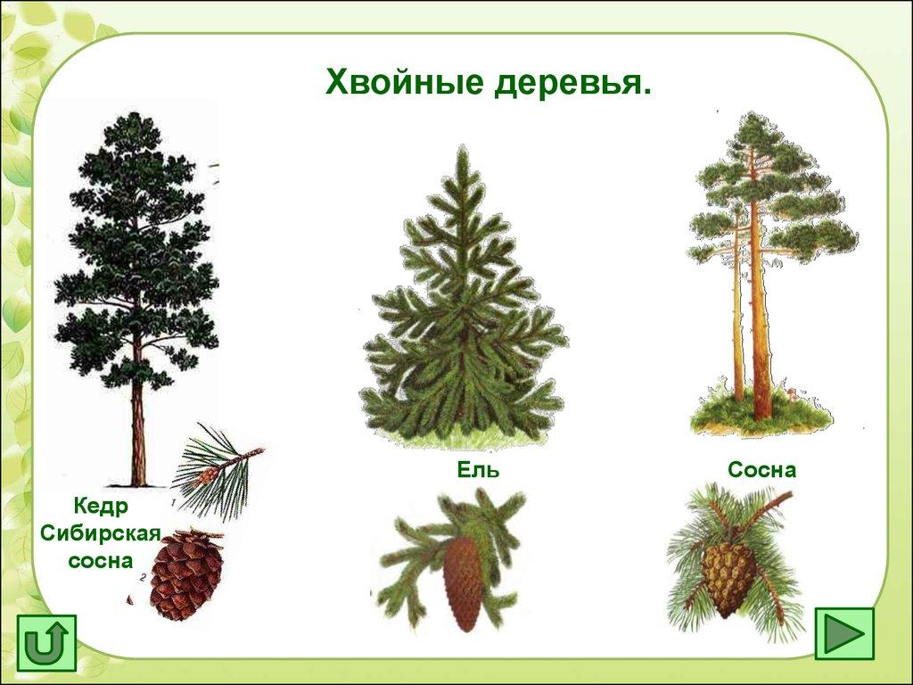 МНИОИ им ПА Герцена  филиал ФГБУ НМИЦ радиологии
