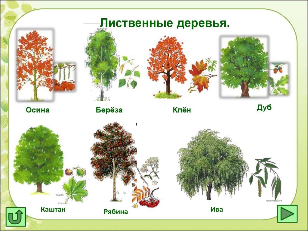 схема в виде дерева