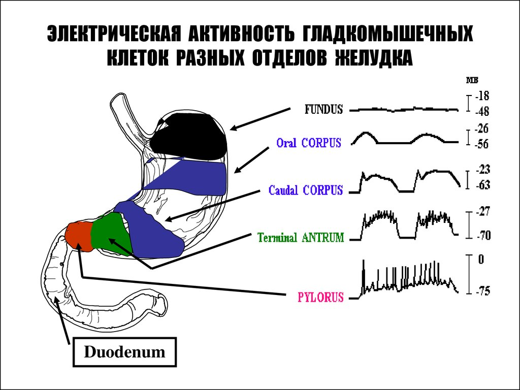 физиология питания реферат