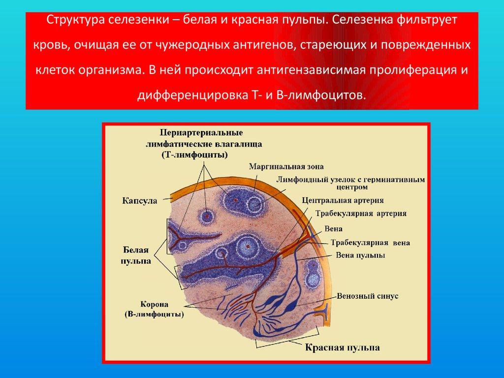 защита организма от паразитов
