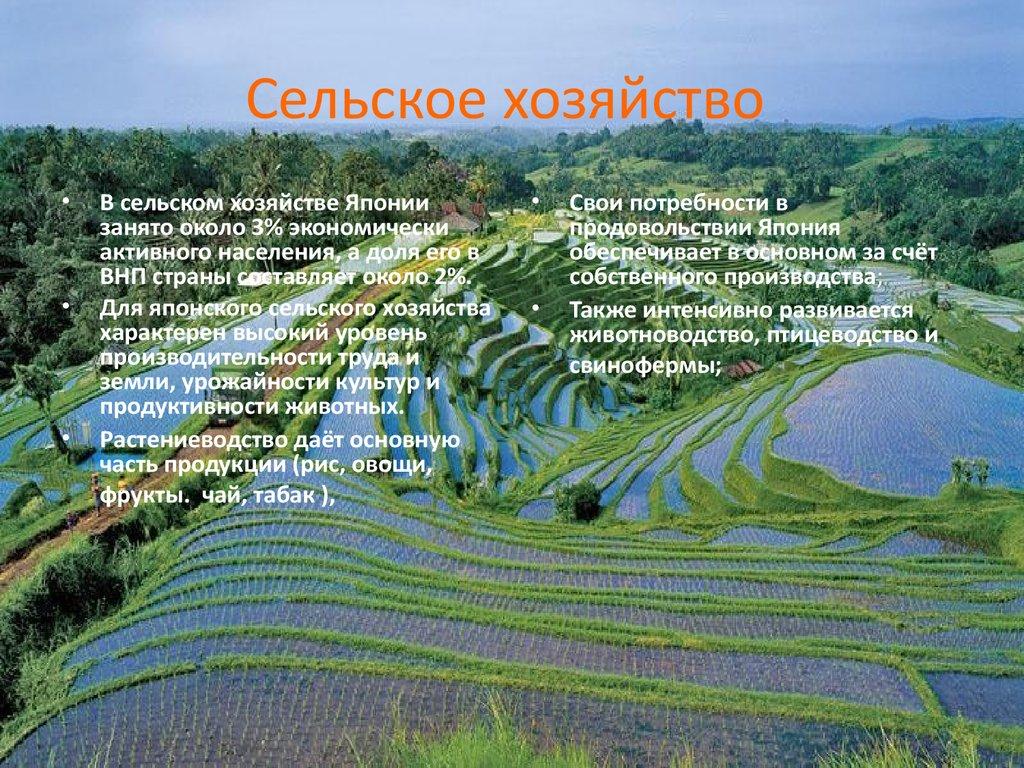 готовый презентация сельское хозяйство
