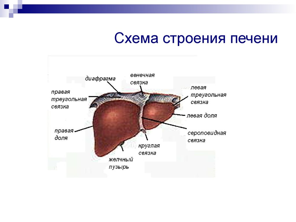 Пцр в диагностике вирусного гепатита с