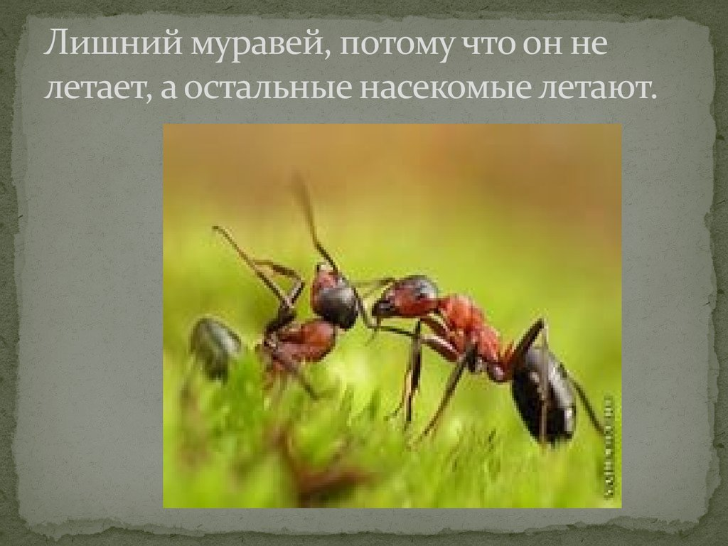 игра пчела