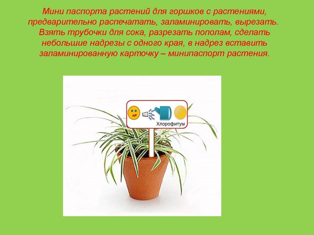 Совместимость комнатных растений Классификация комнатных