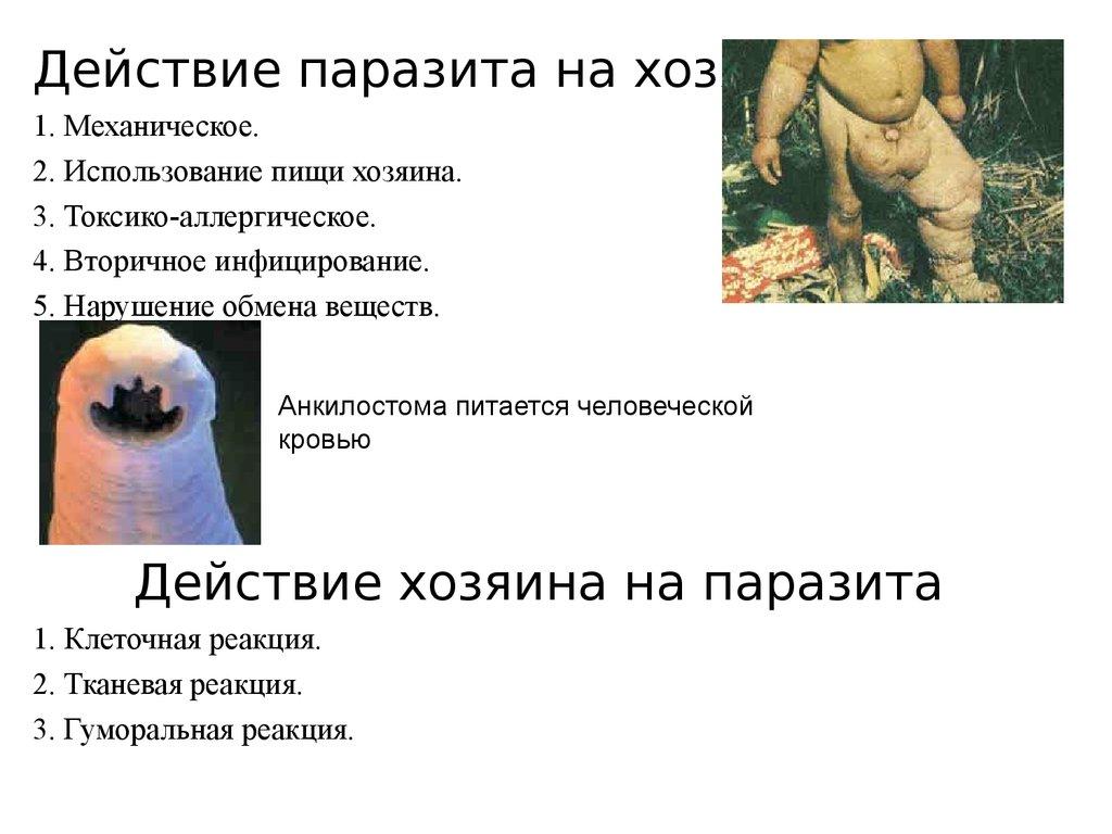 жгутиковые паразиты человека