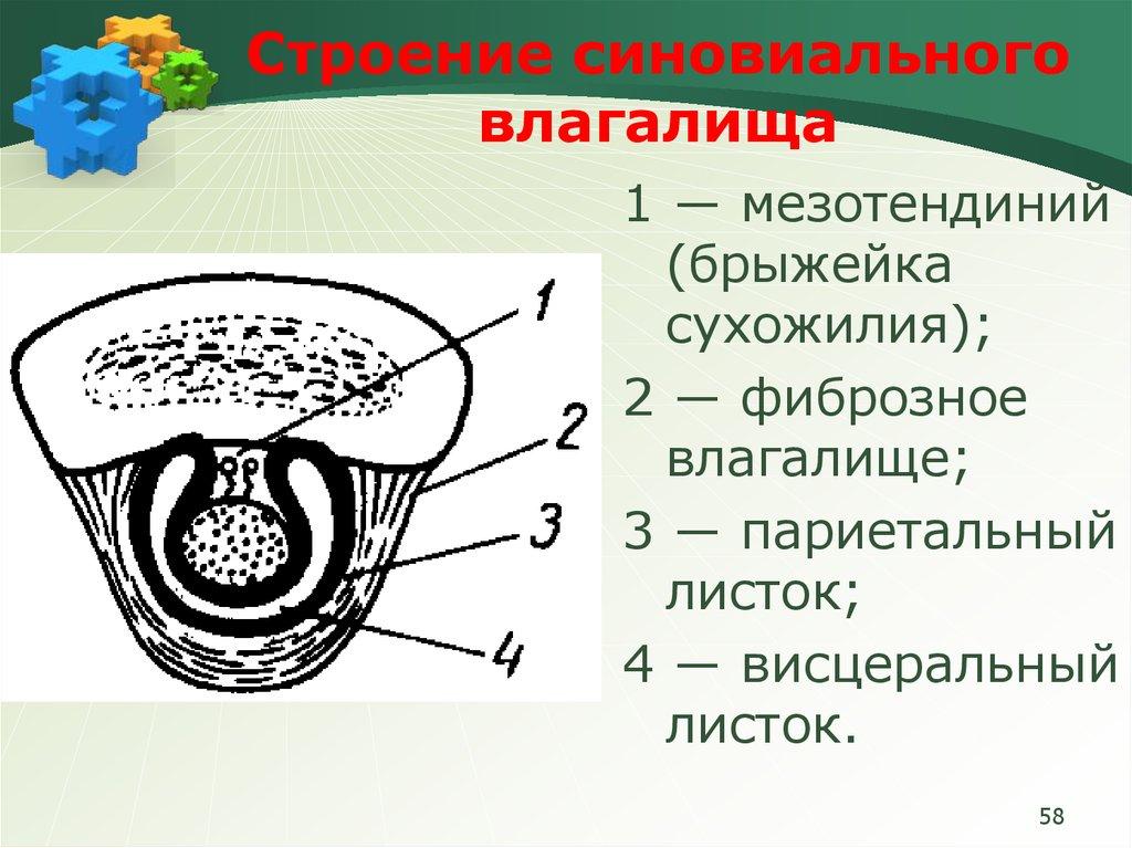 uzkie-vlagalisha-knyaginya