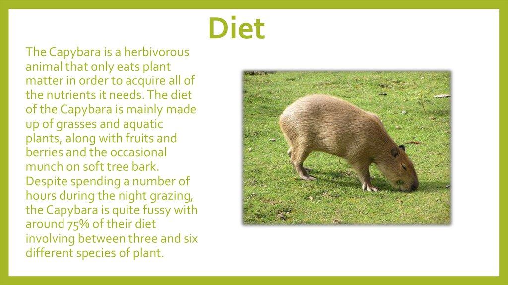 Scientific Diet Dog Food