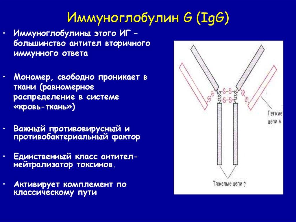 Антирабического иммуноглобулина схема