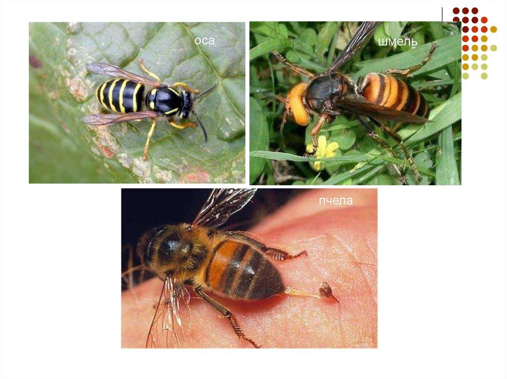 аллергия на омега 3 доппельгерц