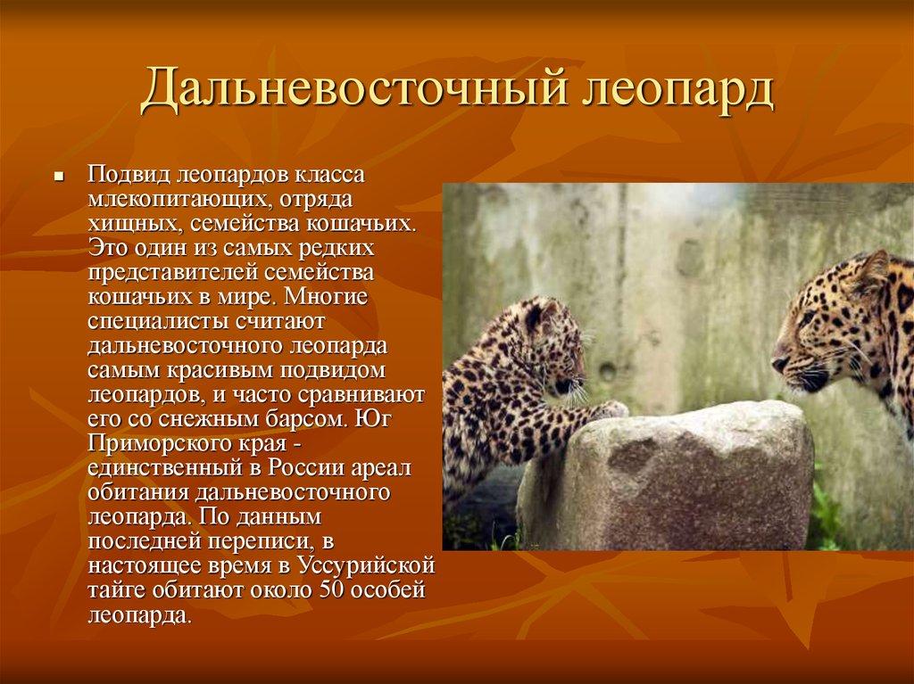 презентация животные и растения зоны тайги