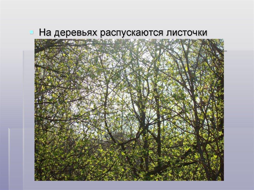 БАДМИНТОН в России  wwwbadmintonru  Гостевая книга