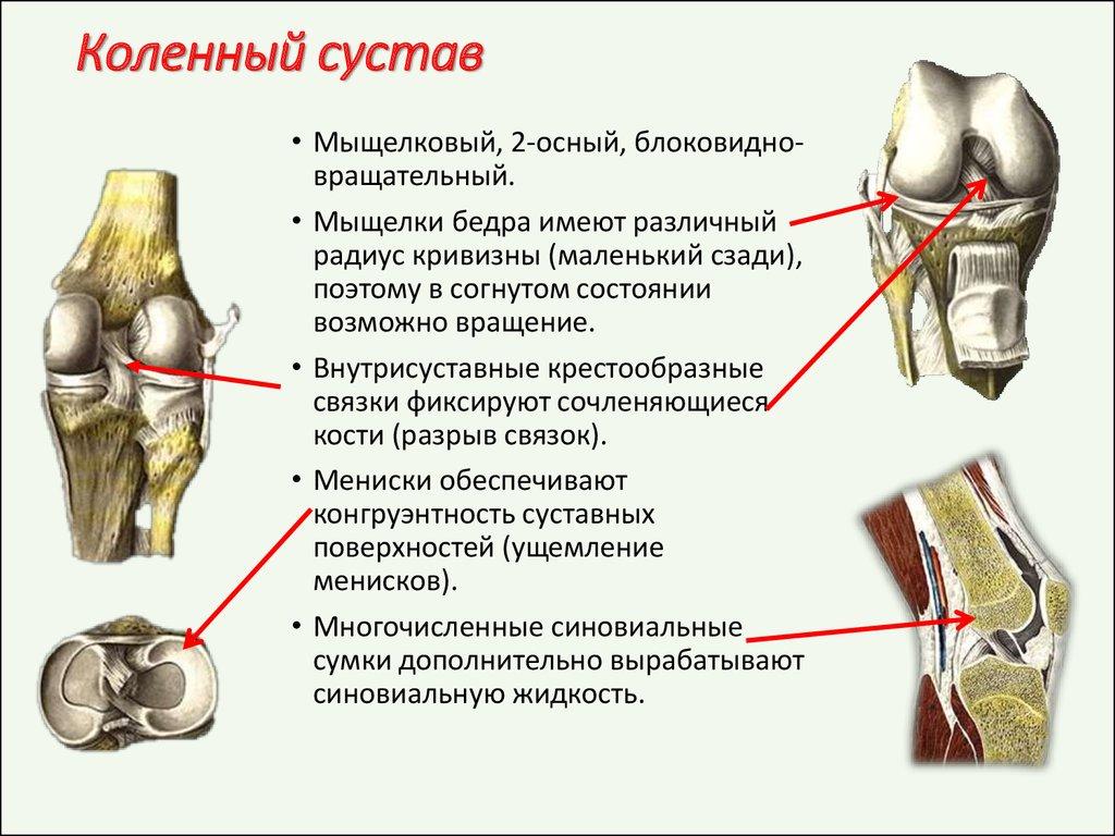 артроз коленного суставов хондропротекторы