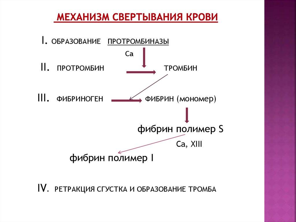 антитоксины это в биологии