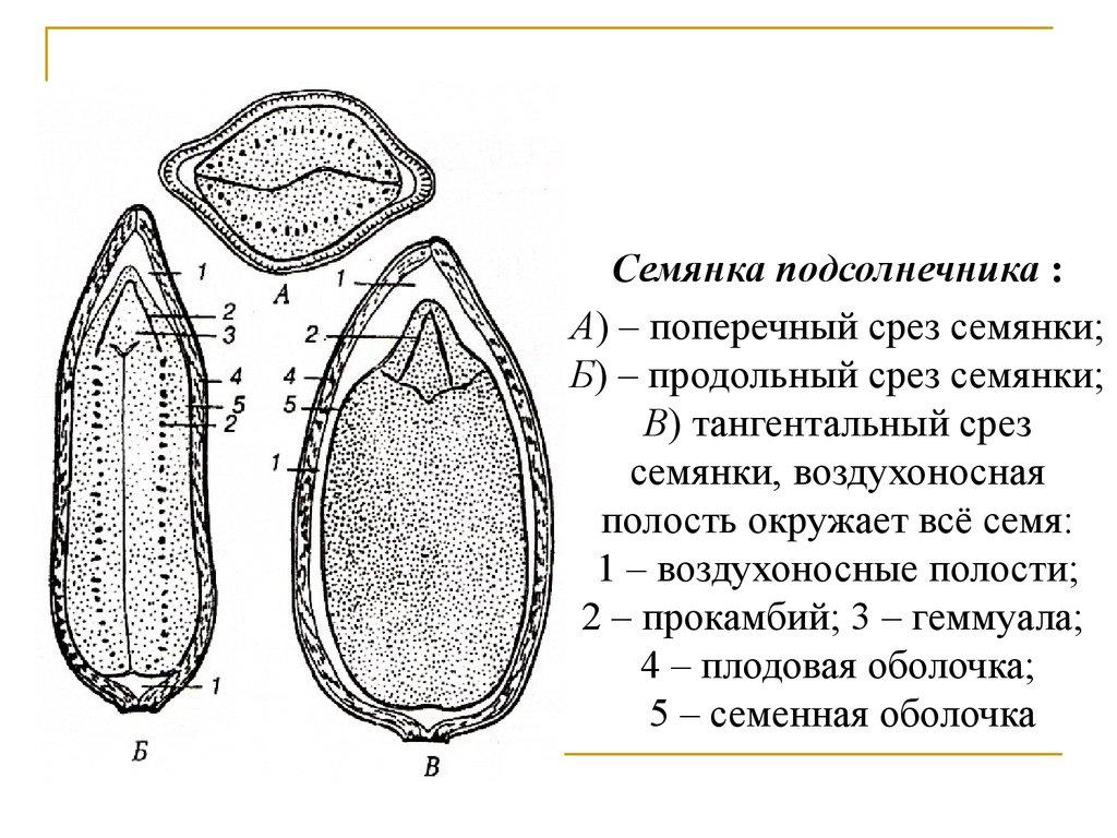 история развития биохимии реферат