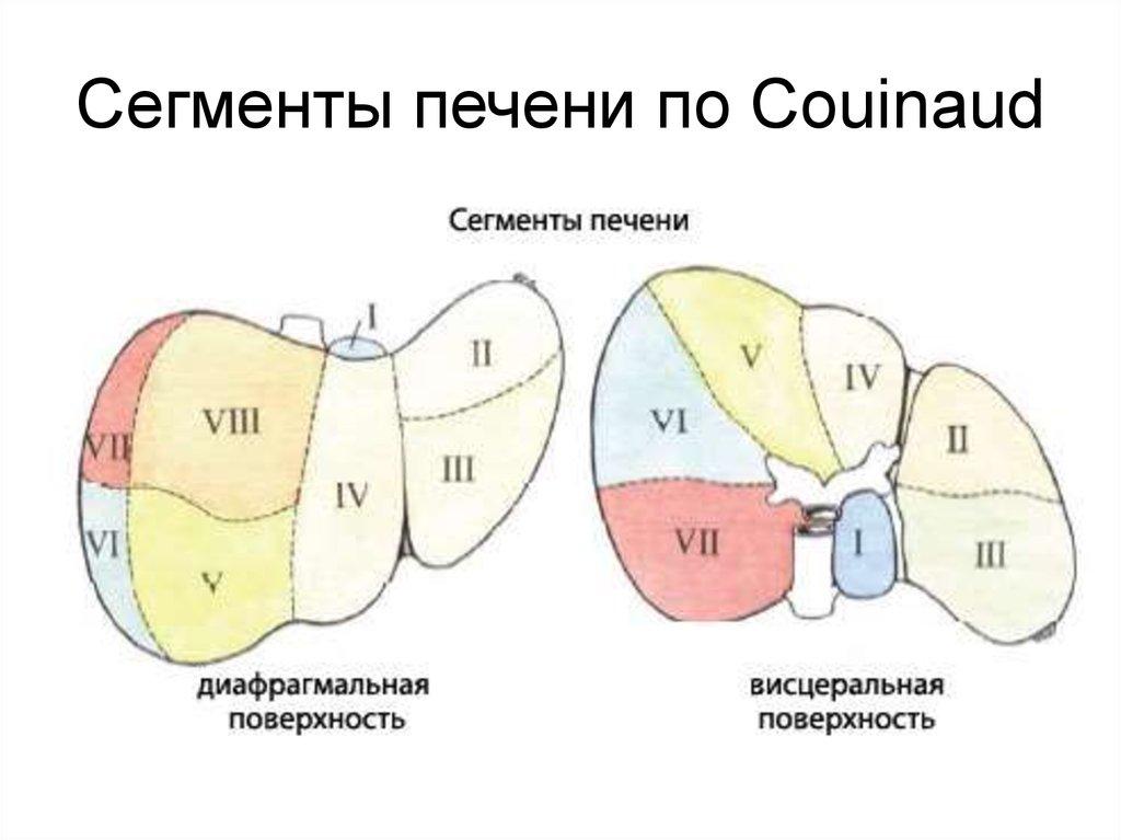 Couinaud liver anatomy