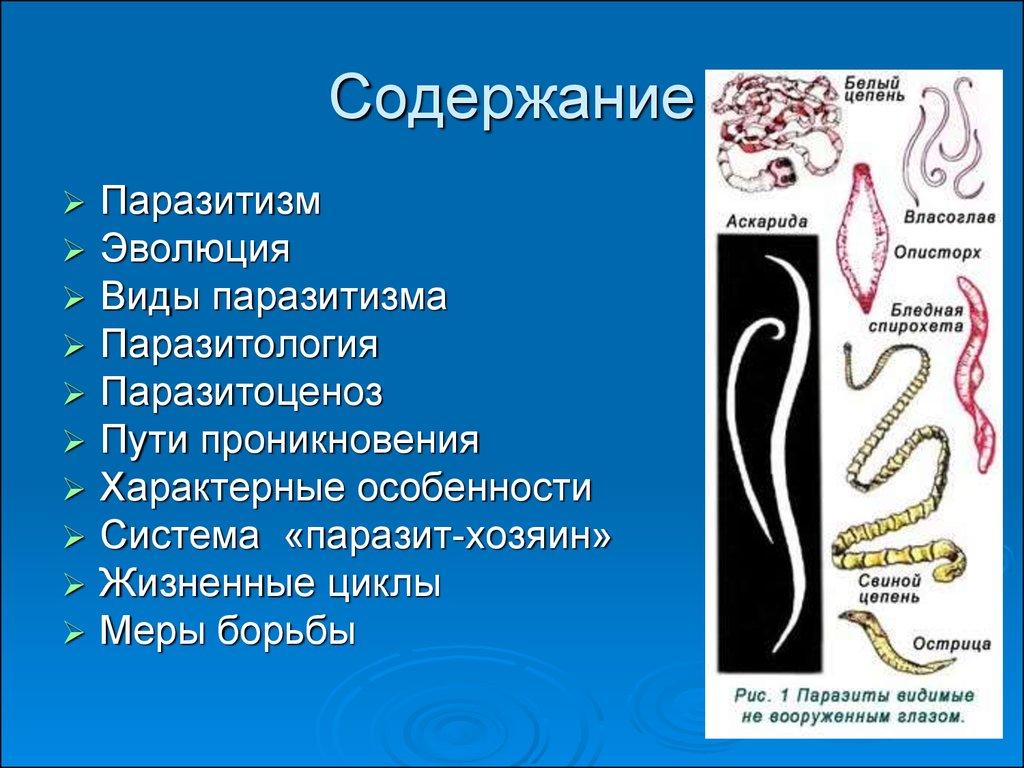 где живут черви у человека