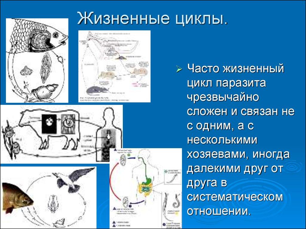 виды паразитов живущих в организме человека