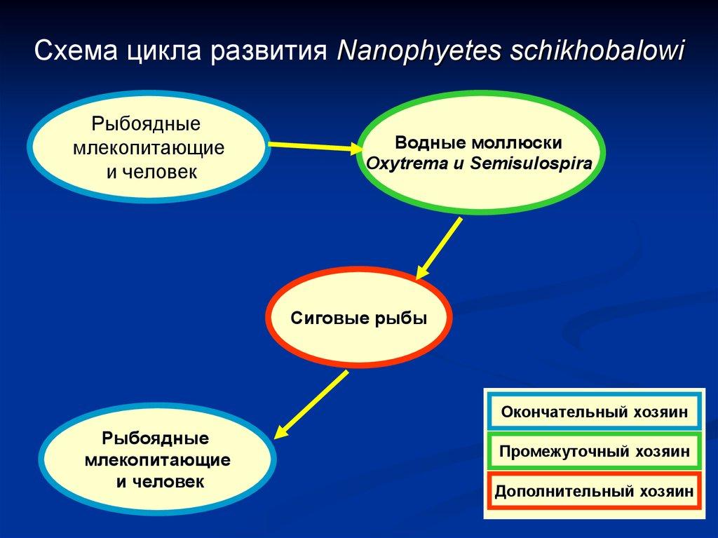 плоские и круглые черви паразиты человека таблица