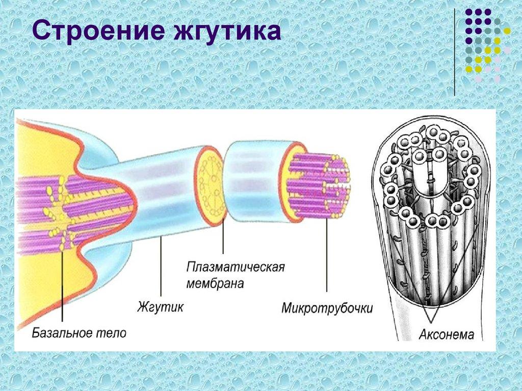 картинка строение грибами
