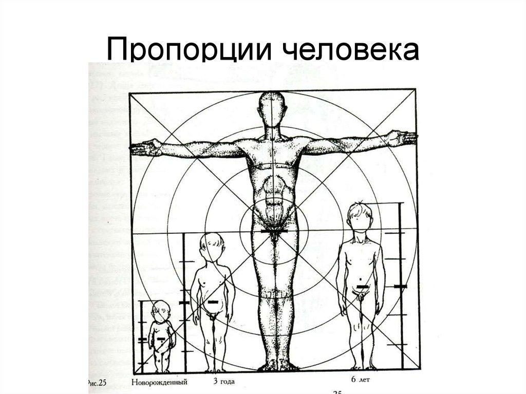 Пропорции человека схема