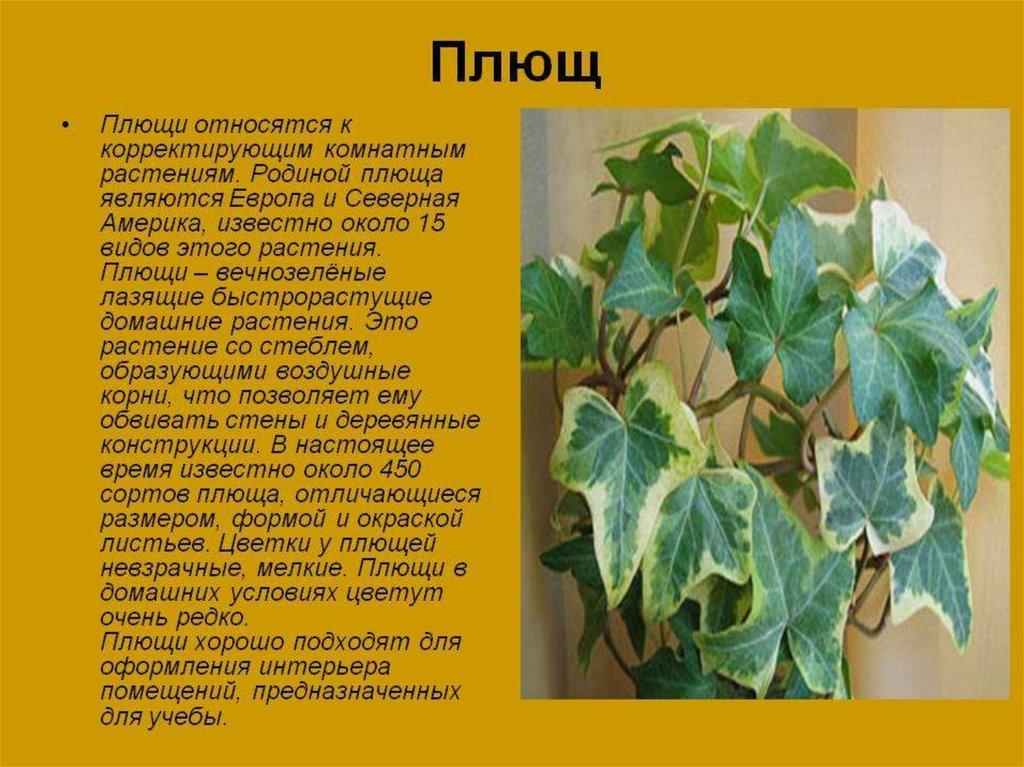 Комнатные цветы и описание и уход