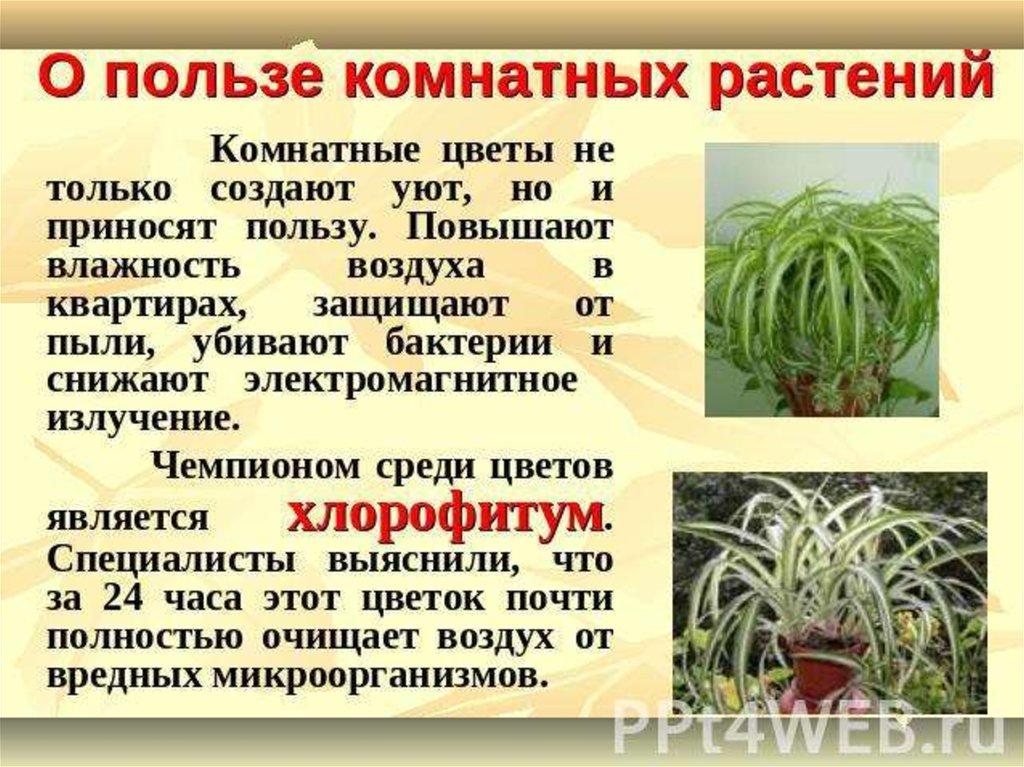 Комнатные цветы и значение
