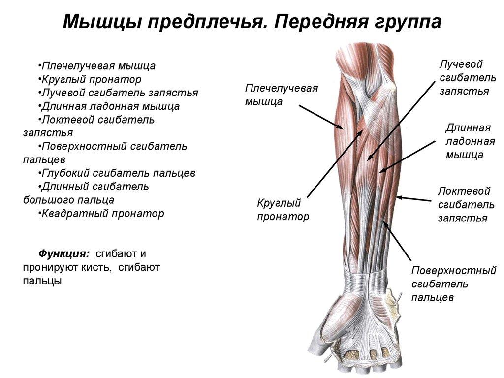 болят суставы по синельникову