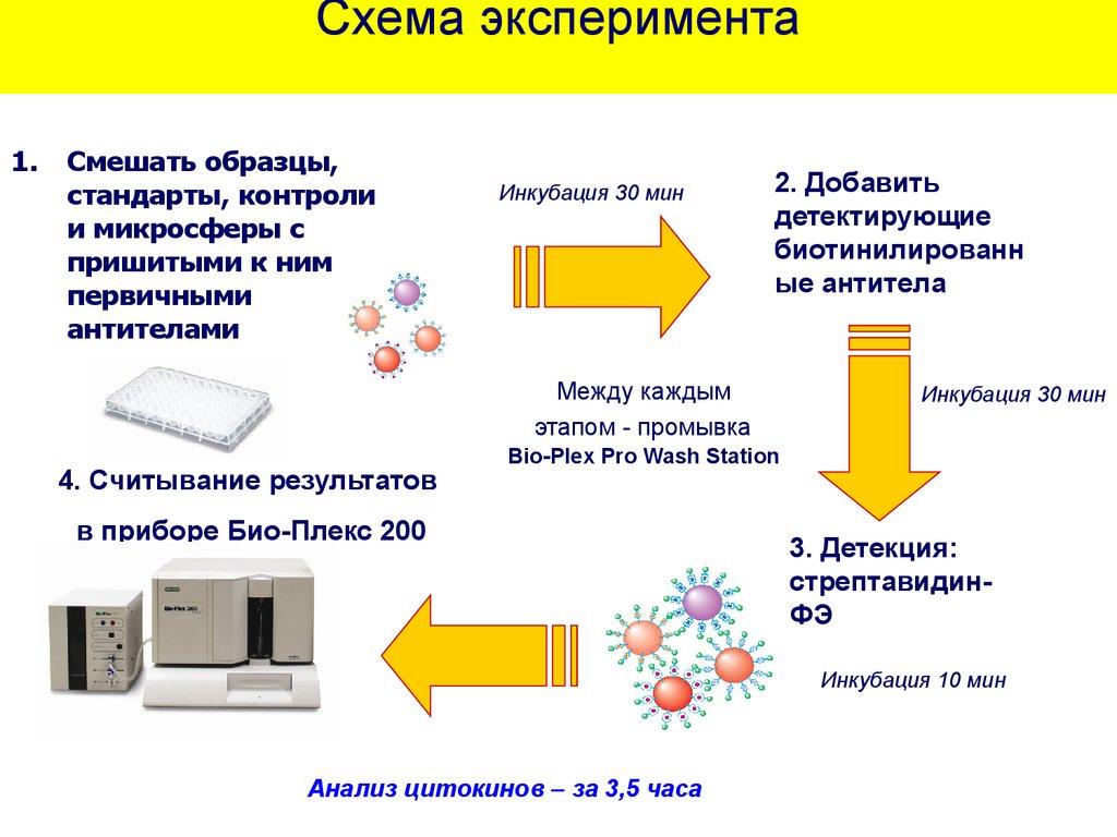 возрастные особенности иммунного статуса