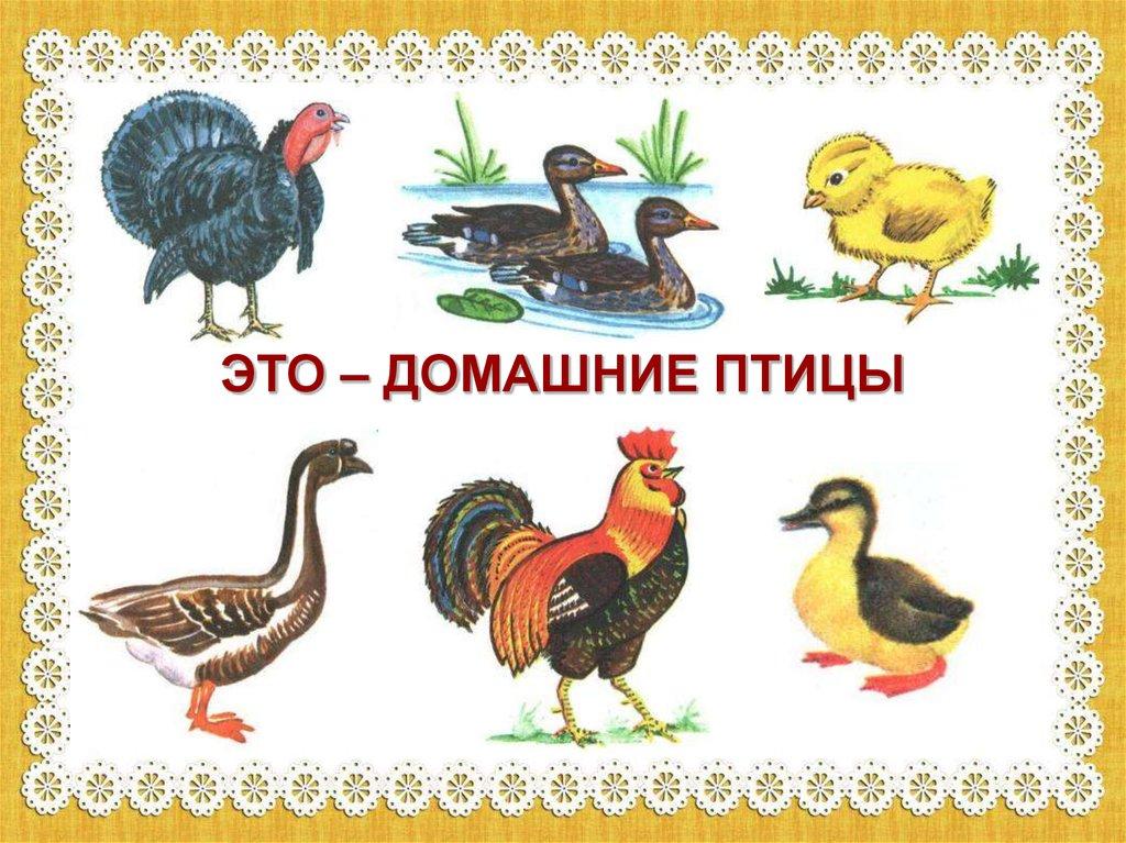 Обувь Презентация для Дошкольников