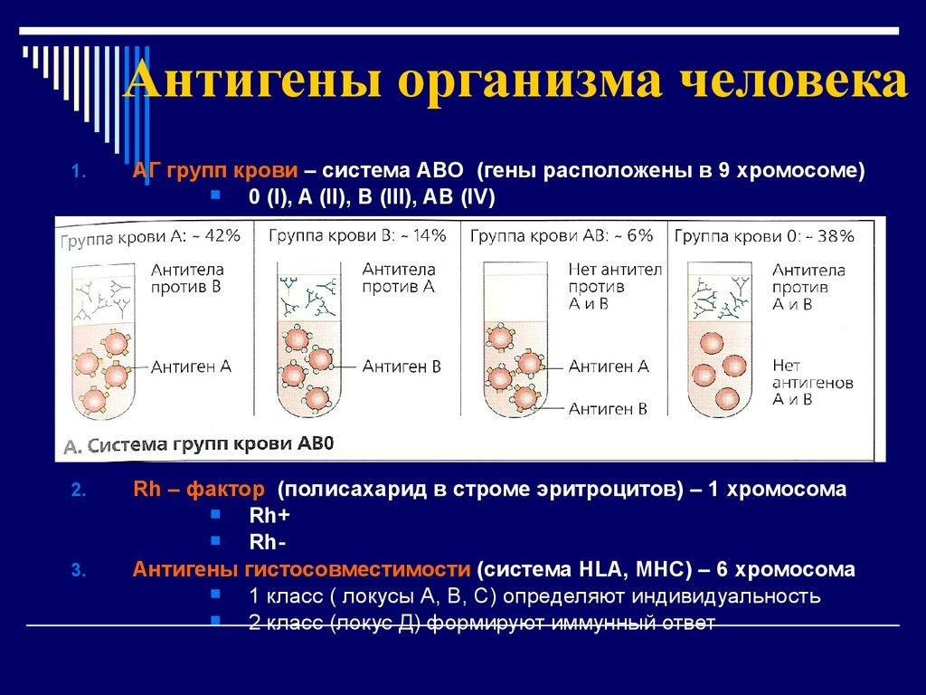 каково значение антигенов и антител системы аво в гемотрансфузной практике