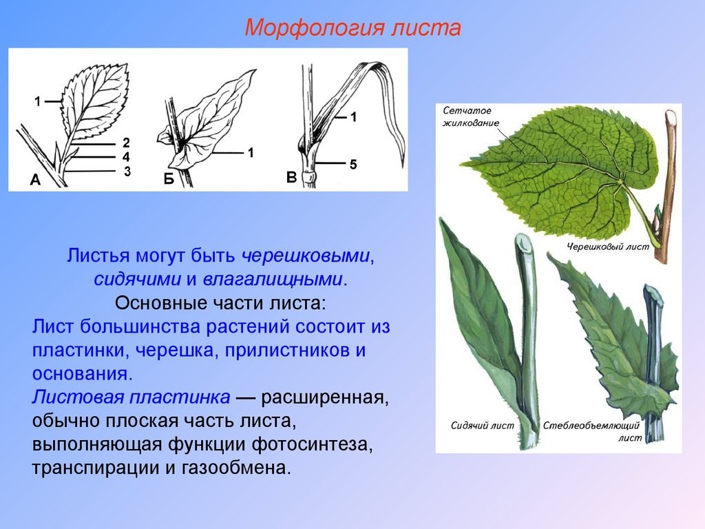 кактус синтез