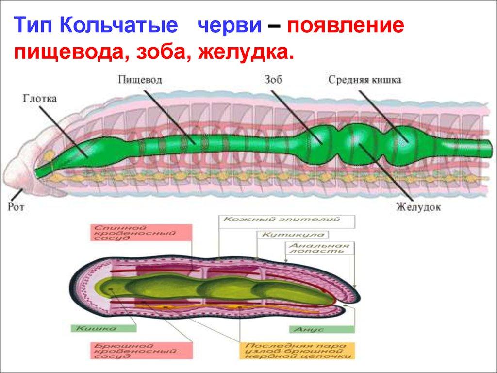 таблетки от паразитов вермокс отзывы