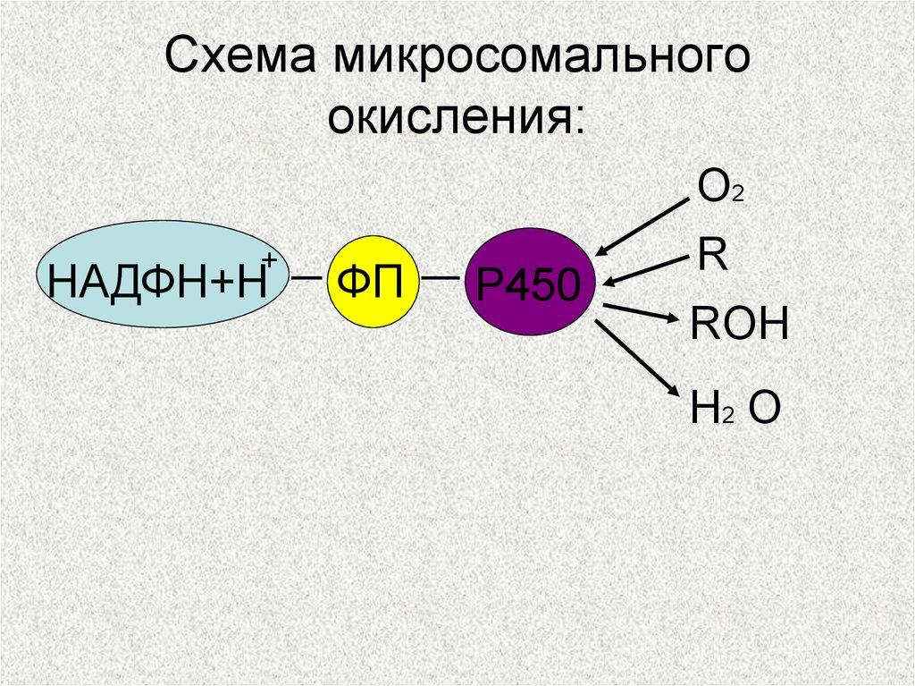 схема передачи вещества и энергии