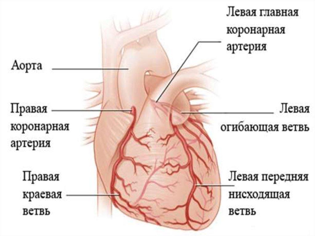 Синус Каротидный