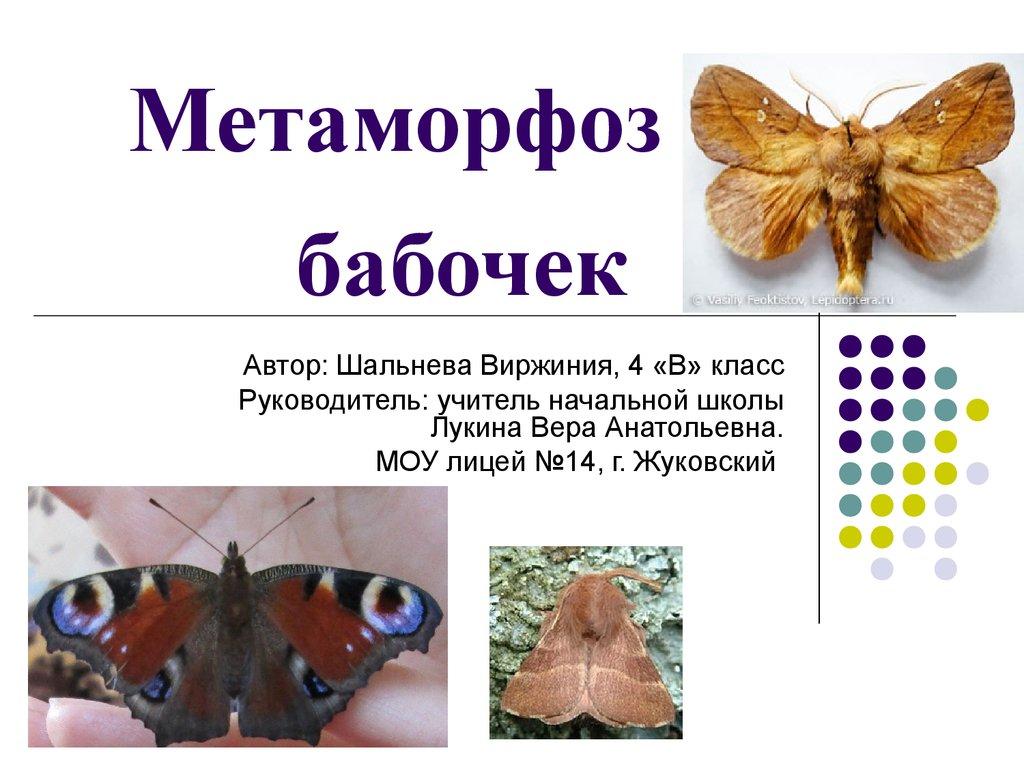 Like for - цикл развития бабочки в картинках - likeforyou