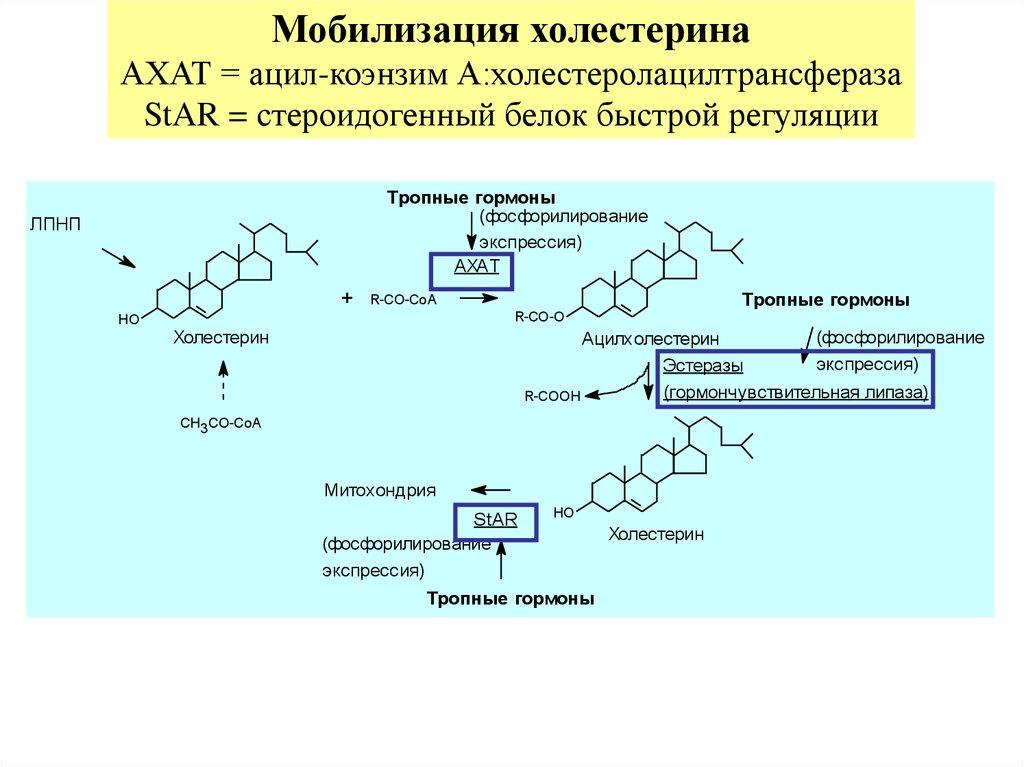 тиреоидные гормоны препараты