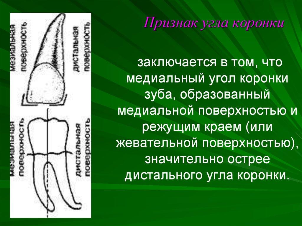 Топография твердых тканей зубов