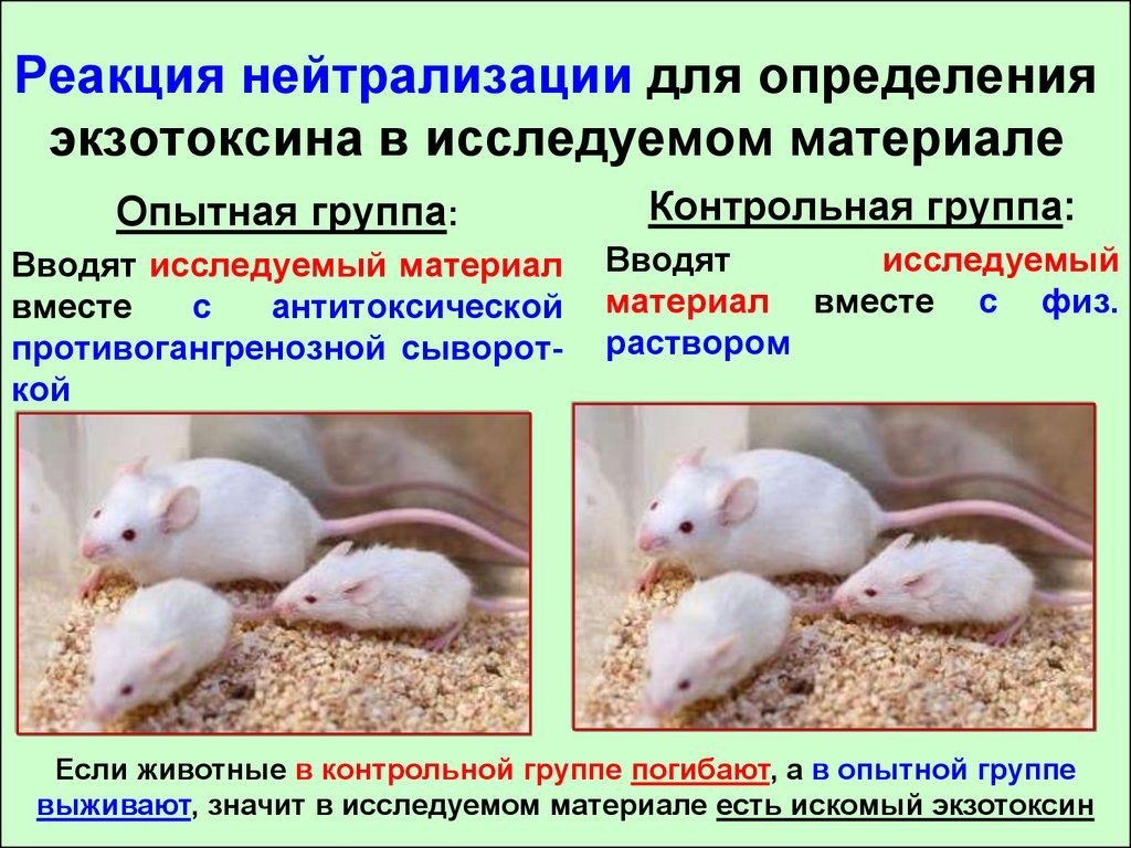 реакция нейтрализации токсина антитоксином in vivo