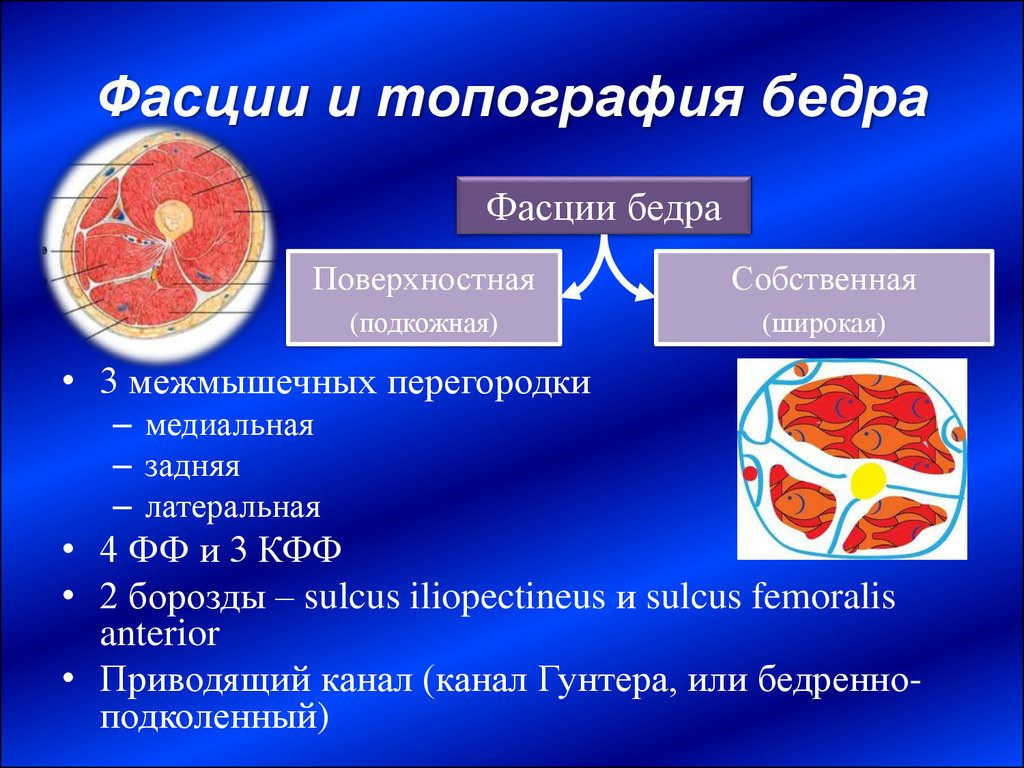 epub The Cortisol Connection Diet: The