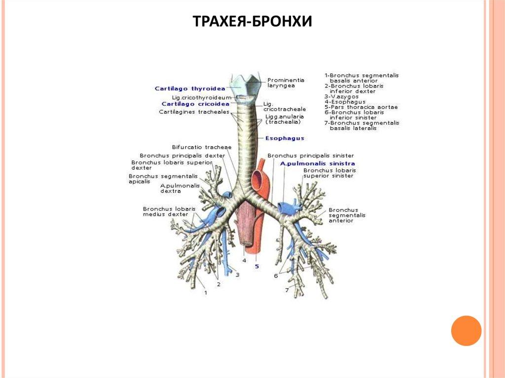 влияние паразитов на организм человека симптомы