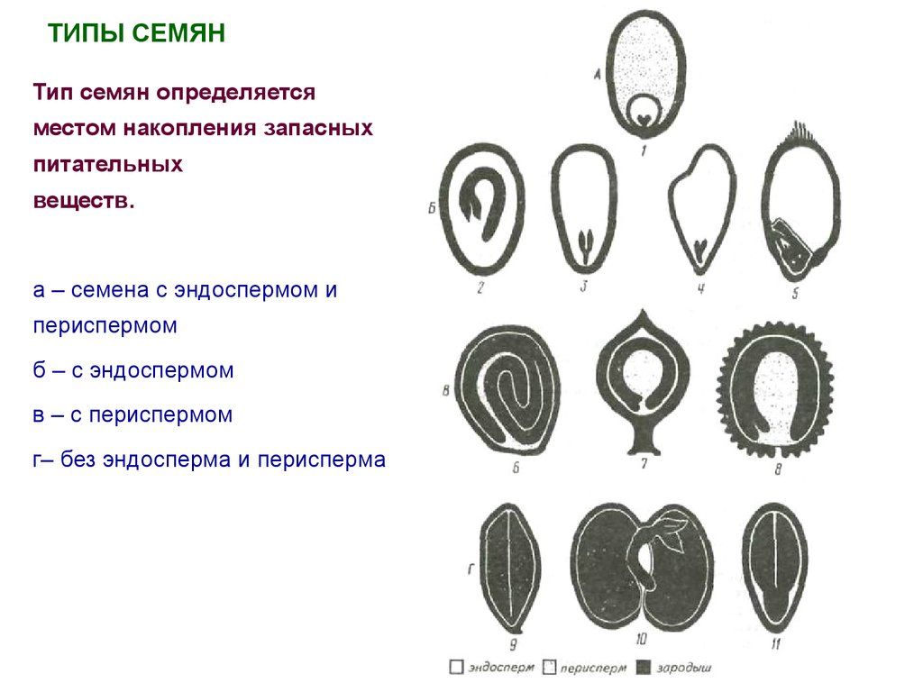 Генеративные органы цветковых растений - презентация онлайн: http://ppt-online.org/58813